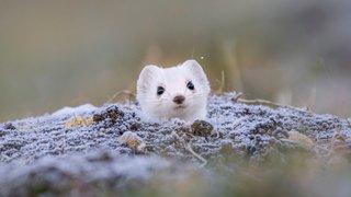 Gland: la faune s'expose à La Lignière