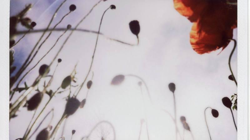 La technique donne aux images un charme particulier qui les rapproche de la peinture.