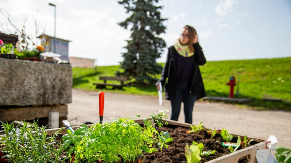 Le Moulin de Chiblins organise ce samedi 6 avril divers cours et démonstrations pour apprendre à créer son propre micro-potager.
