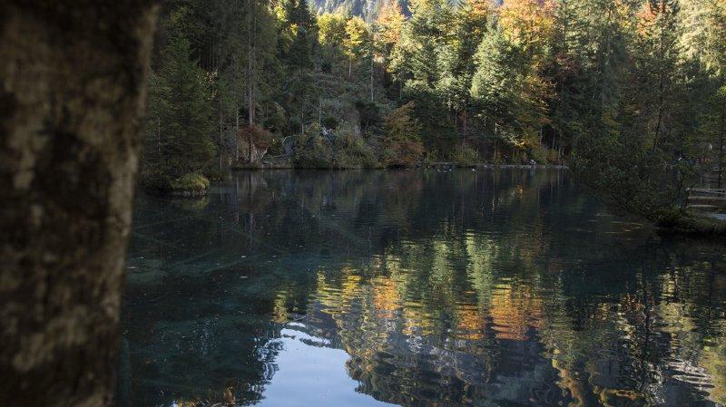7000 espèces de bactéries et 3000 de champignons dans un seul gramme de sol de nos forêts