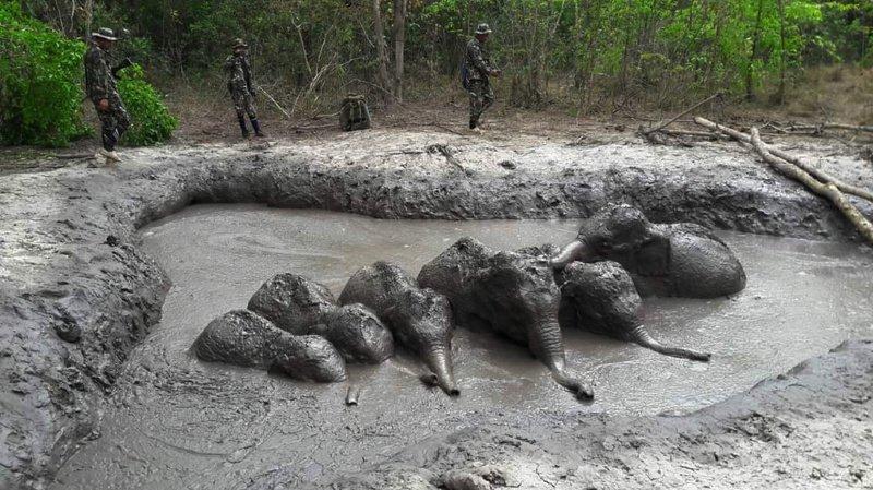 Thaïlande: des bébés éléphants coincés dans la boue sauvés par des gardes forestiers