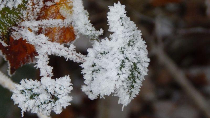 Météo: gel annoncé pour le Valais et le Plateau la nuit prochaine