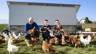 Ils sont aux petits soins pour le bonheur de leurs poules