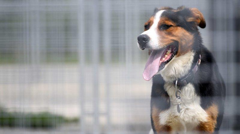 Animaux: si les chiens sont sociables, c'est surtout grâce à leurs ancêtres loups
