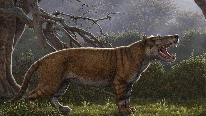 L'animal pesait dans les 1500 kg.