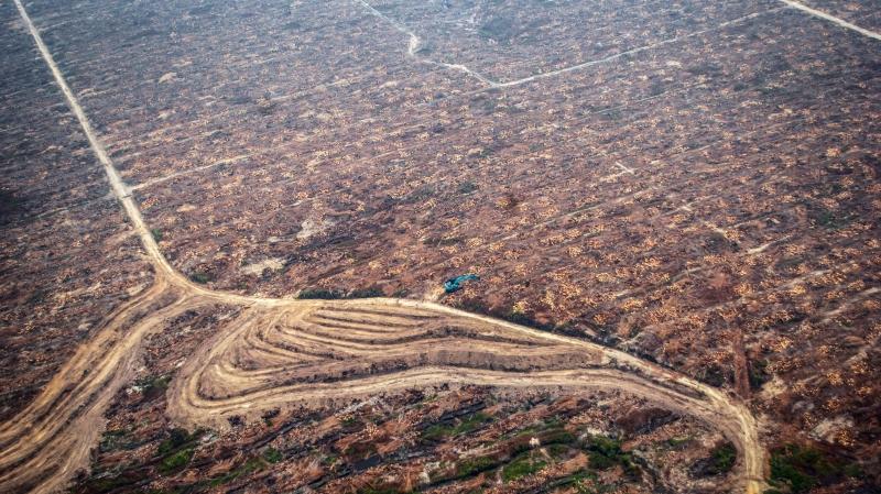 Un satellite pour surveiller l'huile de palme