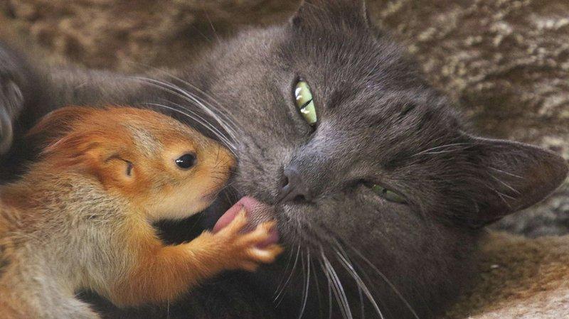chatte rasée Twittergros trou de la queue