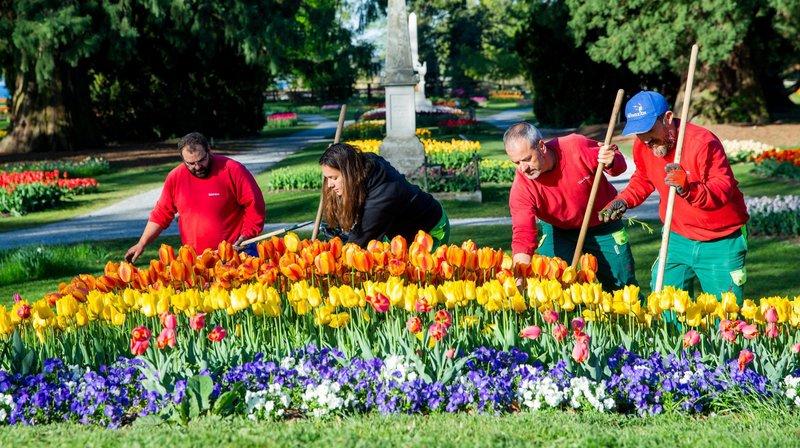 Chaque printemps, La Coquette fait une fleur à ses visiteurs