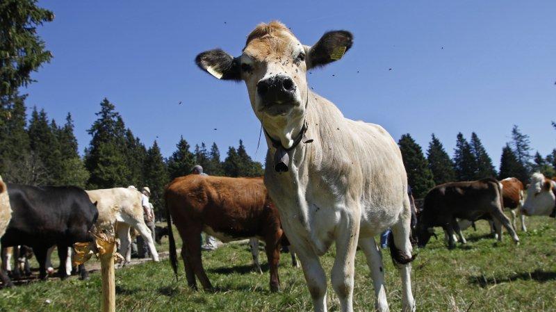 Agriculture: ensemble on est plus forts, et peut-être plus riches