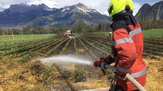 Champ de fraises détruit par le feu à Zizers (GR)