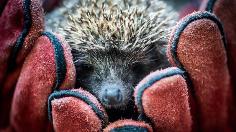 Des millions de petits animaux pourraient être sauvés en Suisse grâce à ces conseils