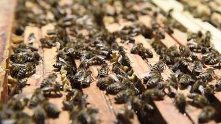 L'importance de célébrer les abeilles