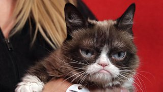 Carnet noir: Grumpy Cat, le chat le plus célèbre du web, est décédé à l'âge de 7 ans