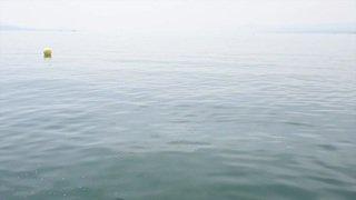 Pour supporter la chaleur, les Romands se jettent à l'eau