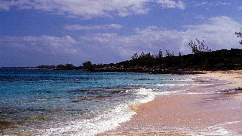 Bahamas: une Américaine tuée par des requins lors d'une plongée en famille