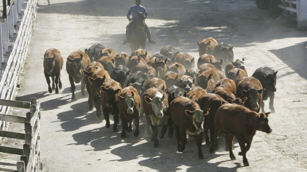 L'accord fixe des quotas d'importation à taux réduit, notamment sur la viande de bœuf argentin.