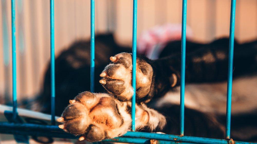Les chiens peuvent être gardés en cage, si ces dernières respectent les conditions stipulées par l'Ordonnance sur la protection des animaux (photo d'illustration).