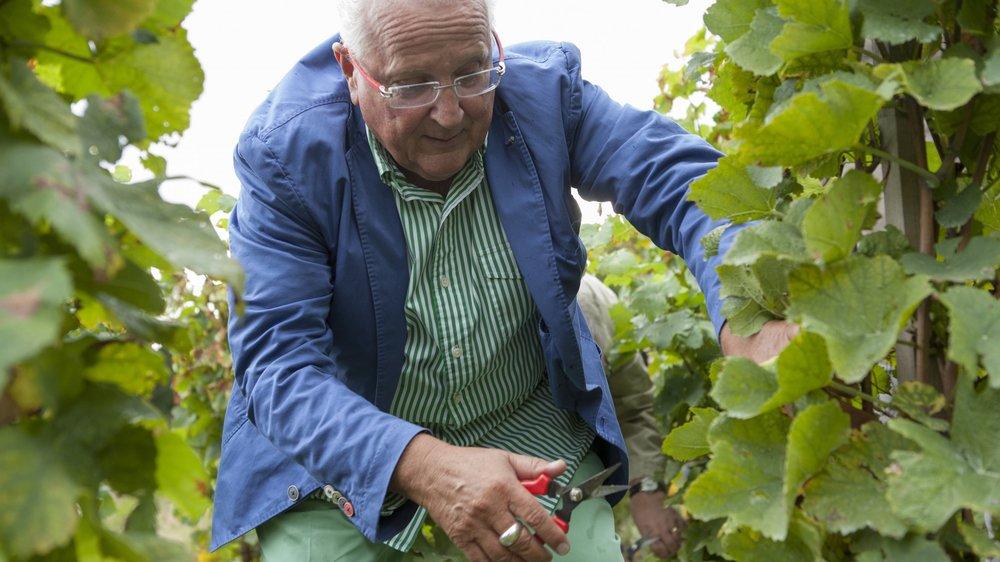 Octobre 2013, Pierre Keller en plein travail dans la vigne du district de Nyon.