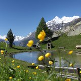 Fascination Nature - Sentier des fleurs des Alpes