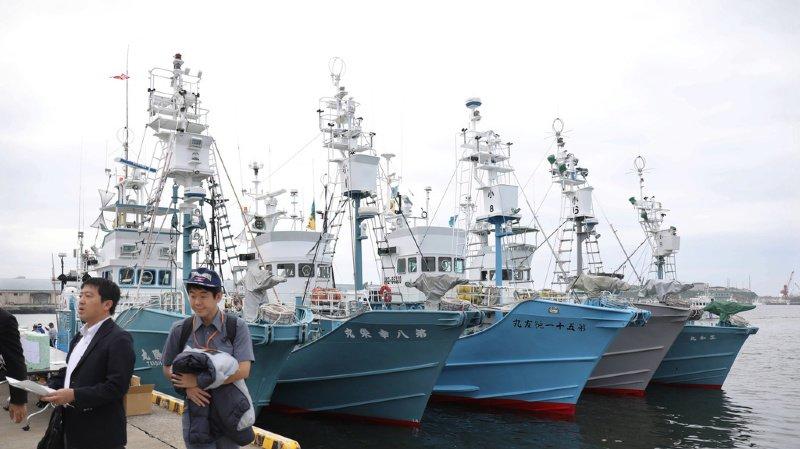 Japon: la chasse commerciale à la baleine recommence après 30 ans d'arrêt