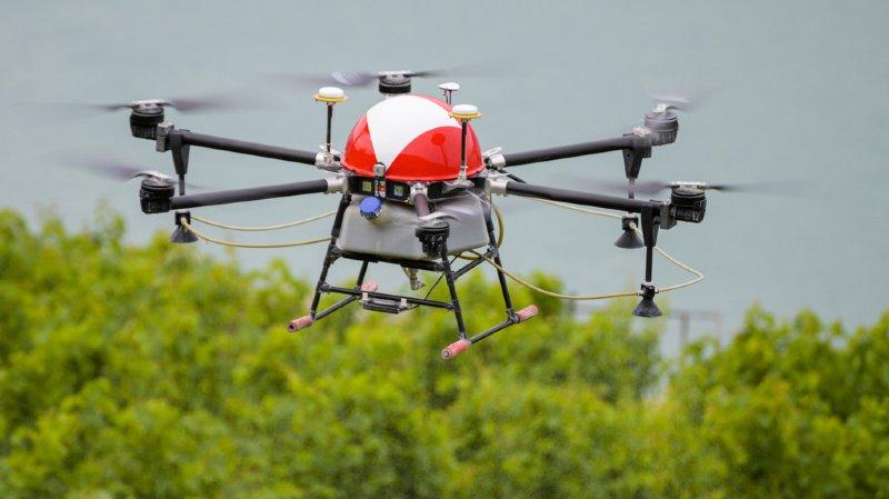 Viticulture: les drones et les hélicoptères doivent cohabiter pour traiter les vignes depuis les airs