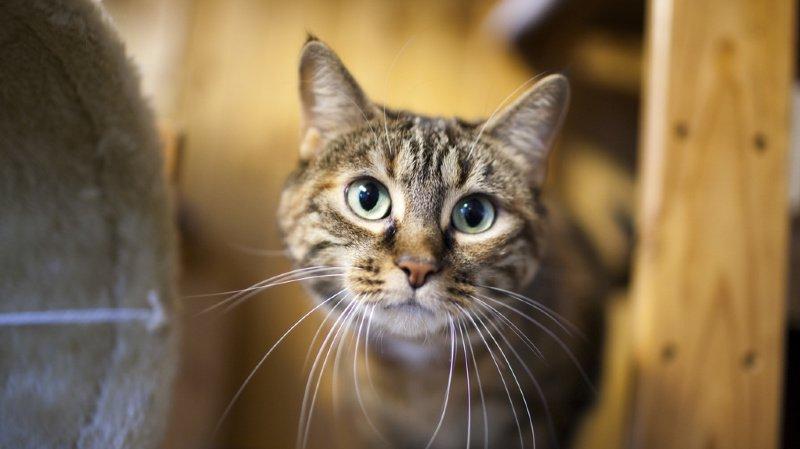 Adoption: près des 2/3 des animaux placés dans des refuges l'an dernier ont trouvé un foyer