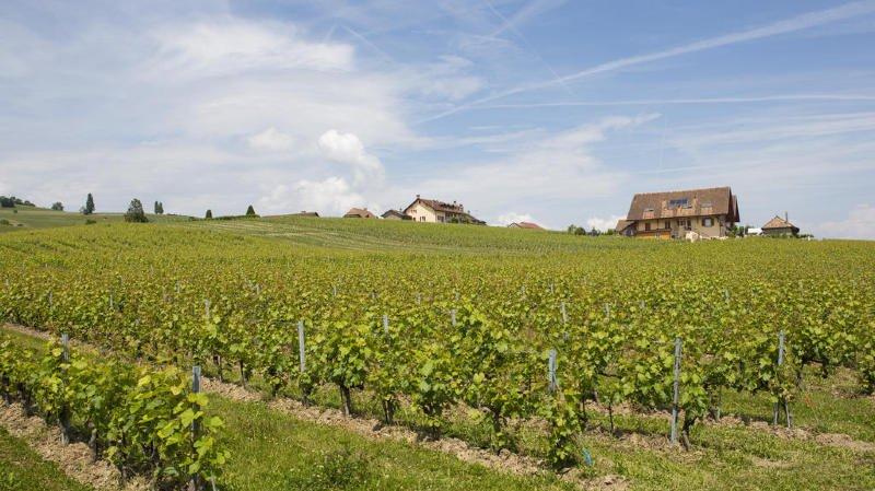 La Côte produit près de la moitié des vins vaudois.
