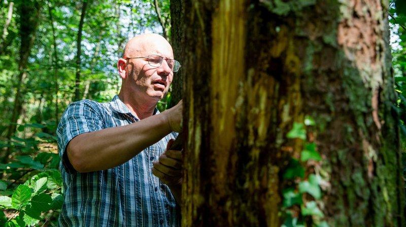Forêts: 5 conséquences du réchauffement climatique