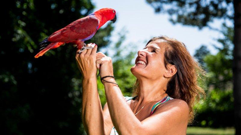 Rolle: grosse opération pour sauver le perroquet «Koba»