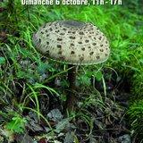 Fête d'automne du Jaridn botanique