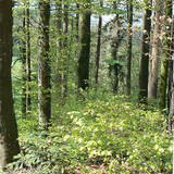 Visite forêts du Chanet