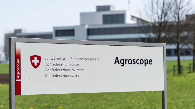 Recherche agricole: la restructuration d'Agroscope est retardée