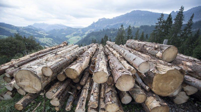 Environnement: le bois issu de coupes illégales sera interdit en Suisse