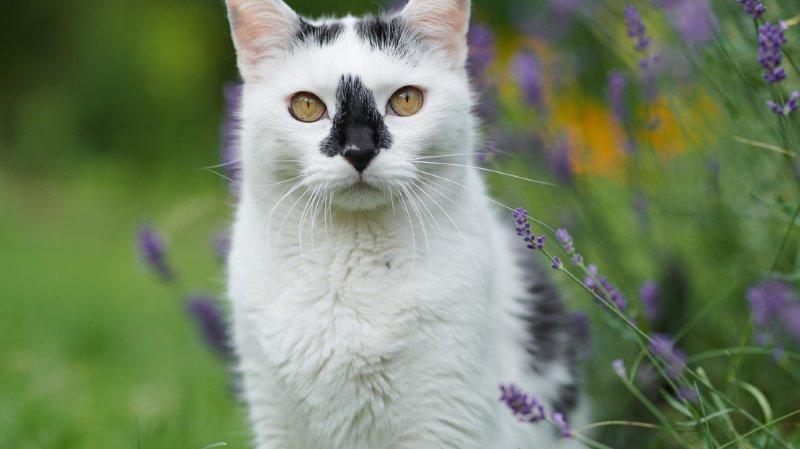 L'identification électronique faciliterait les campagnes de castration de chats errants.