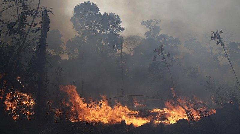 Les feux de forêt ont atteint un nombre record en Amazonie cette année. Après avoir assuré que la situation était sous contrôle, le président brésilien Jair Bolsonaro se dit désormais prêt à accepter l'aide internationale.