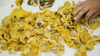 Vaud: pincé par les douaniers avec 350 kilos de chanterelles