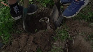 Enterrer des sous-vêtements pour déterminer la qualité du sol