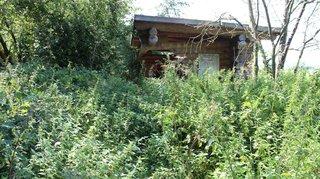 Saint-Prex épinglé pour s'être laissé envahir par la verdure
