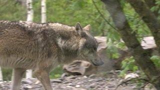 Loi sur la chasse: les avis divergent encore