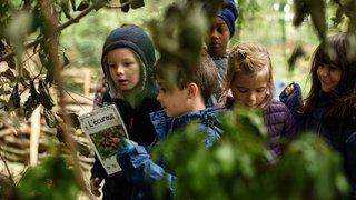 A Aubonne, ils font l'école au milieu des arbres