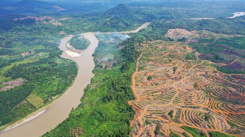 Les effets sur l'environnement liés à l'huile de palme sont au centre des débats.