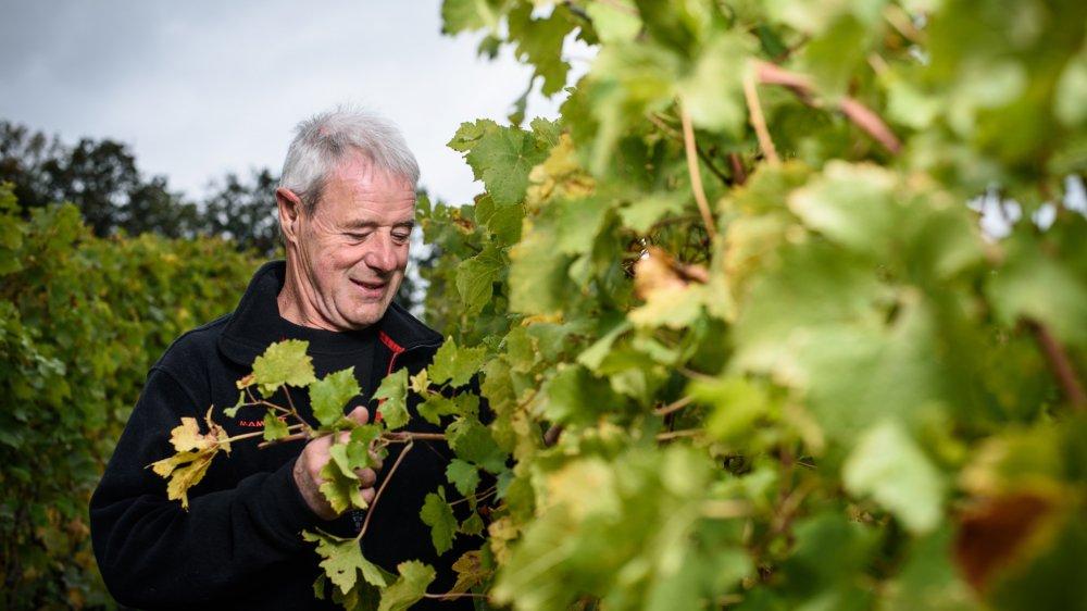 Raymond Paccot ne se contente pas de soigner sa vigne. Il l'écoute, la sent, la creuse, avec une curiosité jamais tarie.