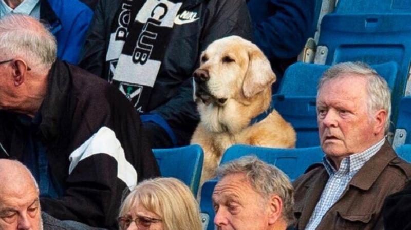 Écosse: habitué du stade, ce chien a son propre abonnement et suit tous les matchs