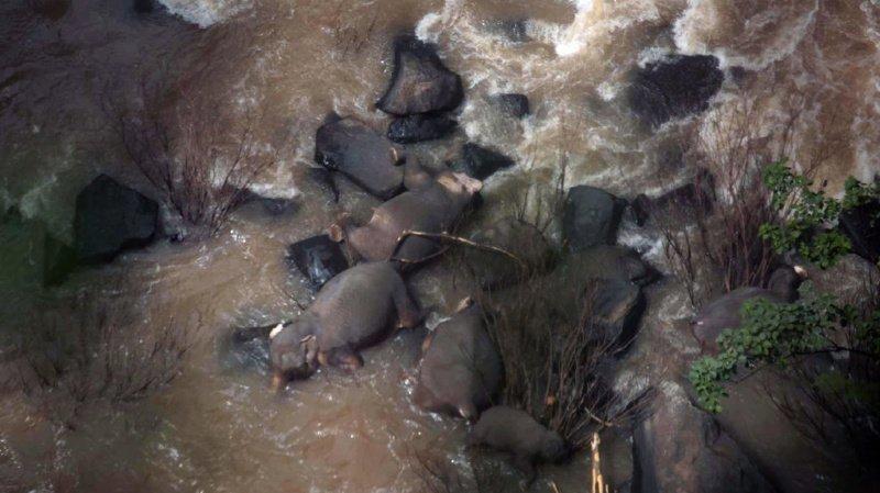 Thaïlande: six éléphants meurent en chutant dans une cascade