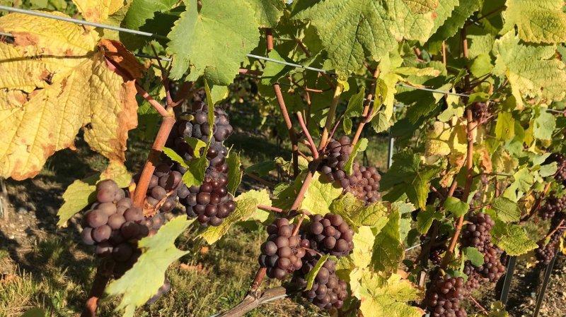 Les vignes de La Côte, si riches et variées