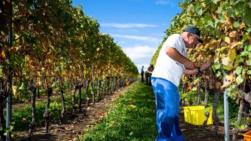 Vaud: taxe quasiment supprimée pour les vignerons