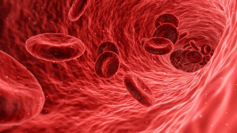 """Ce sang artificiel peut être stocké à température """"normale"""" pendant plus d'un an."""
