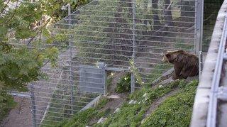 Pour un nouvel enclos à ours