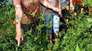 Nyon: grand pique-nique pour fêter les récoltes