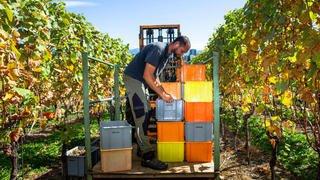 Vaud: il y aura moins de vin 2019 mais il sera de qualité